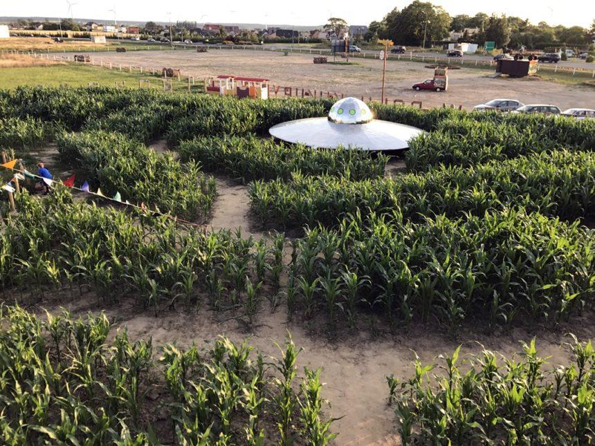 Labirynt w kukurydzy