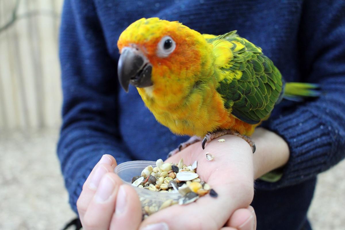 Papugarnia