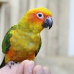 Papugarnia Papuga House
