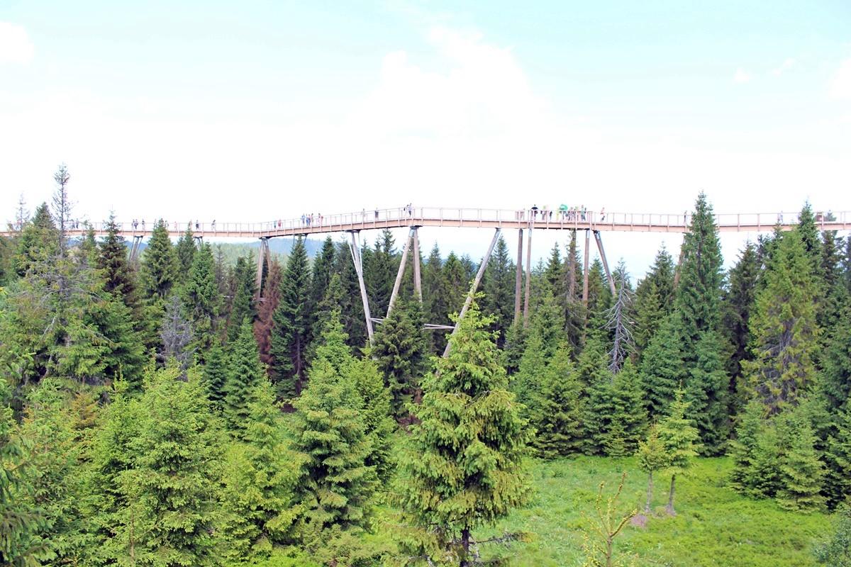 Sciezka-Koronami-Drzew